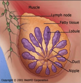 cellular transformation breast illustration