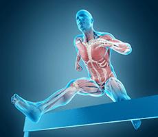 men anatomy jumping over hurdle
