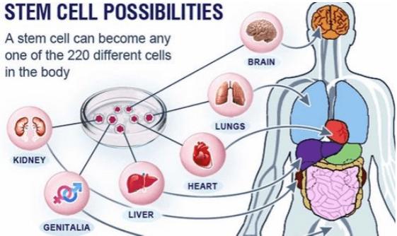 Stem Cells Advanced Regenerative Medicine Treatments