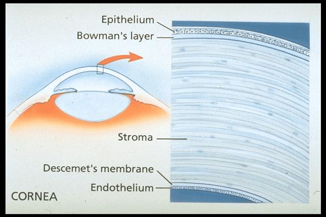 Layers Of Cornea