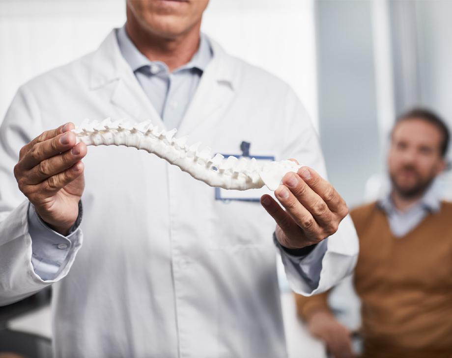 doctor holding spine structure model
