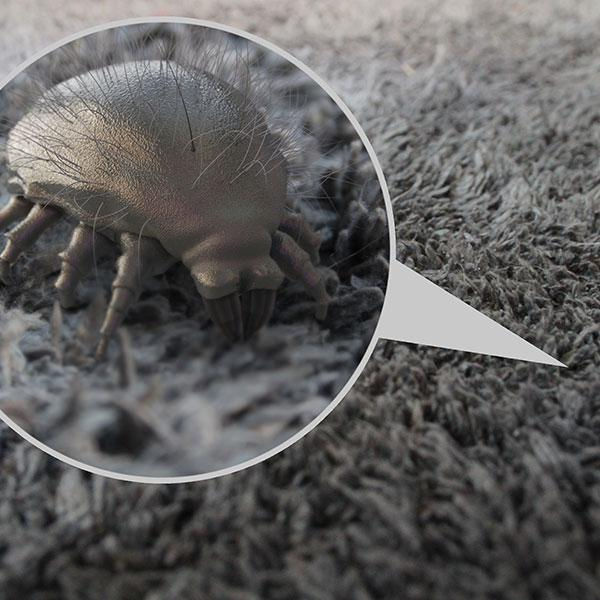 Dust Mites service image