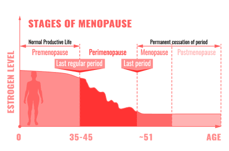Estrogen Levels vs Menopause phase graph