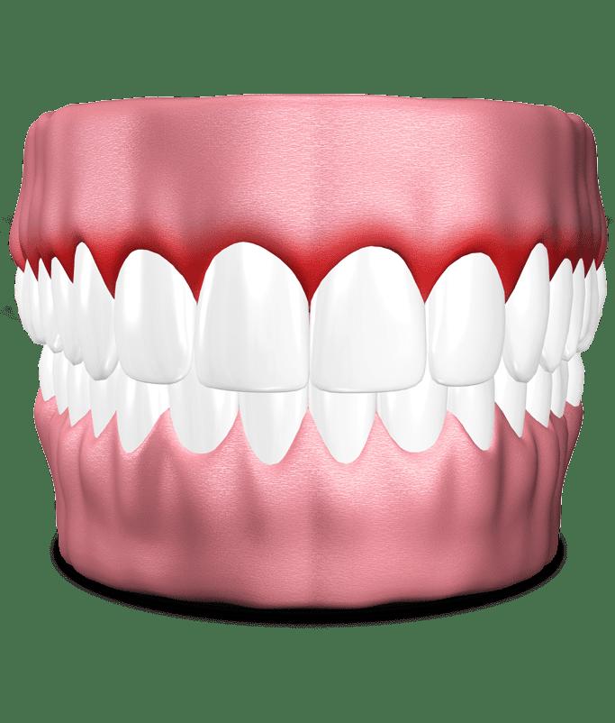 Diagram of teeth