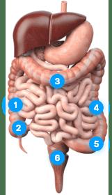 Diagram of the colon