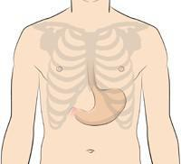 Image of the location of the stomach