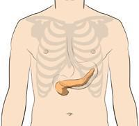 Image of the location of the Pancreas