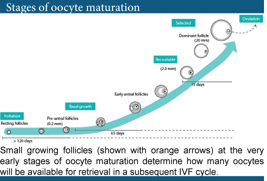 Preparation of ovaries