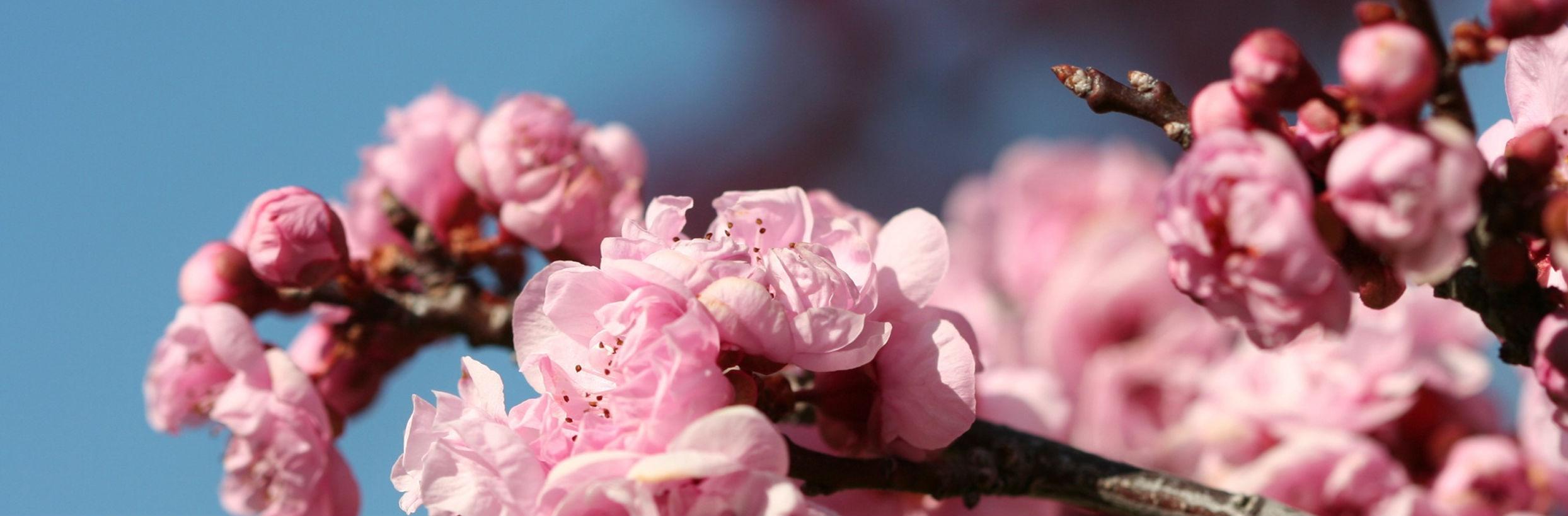 floral header