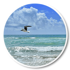 Kasraeian Urology: Urology: Jacksonville, FL & Jacksonville