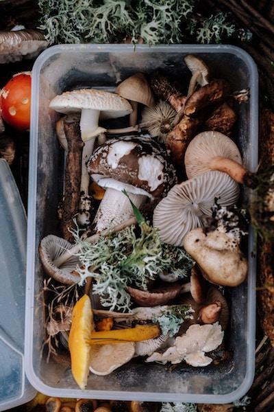 Mushrooms in container