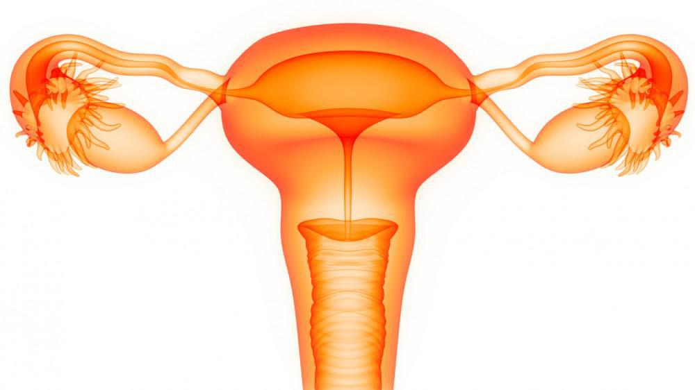 How to Improve Your Uterine Lining to Prepare for IVF: Lane
