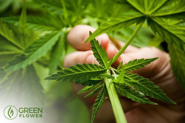 5 Ways To Help Get Rid Of The Stigma Around Cannabis