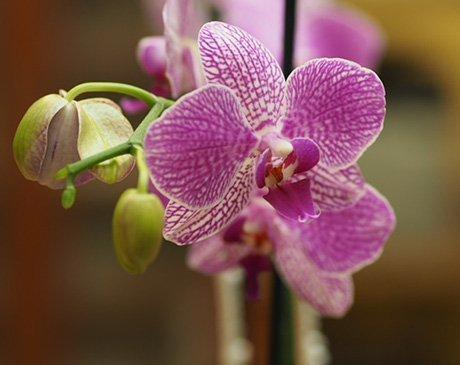 Orchid OBGYN