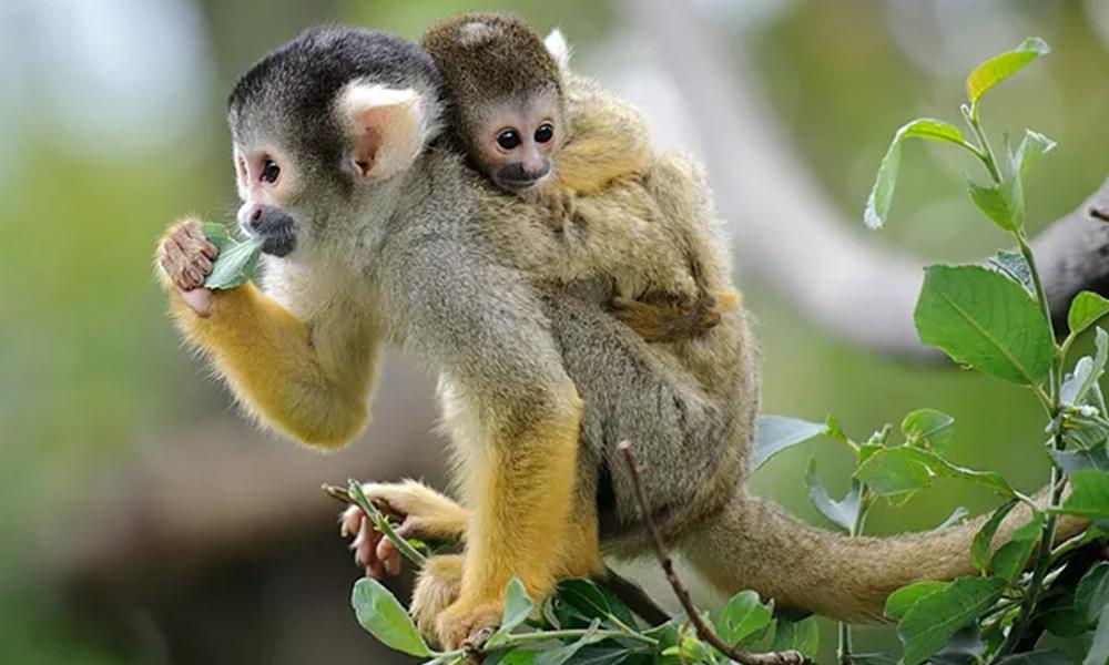 A2. From Squirrel Monkeys to Medical School