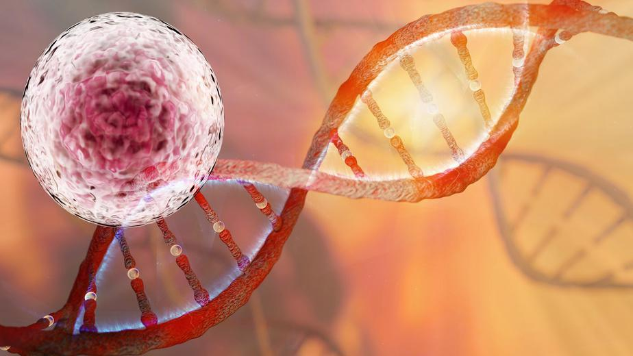 Stem Cells contain the DNA to r