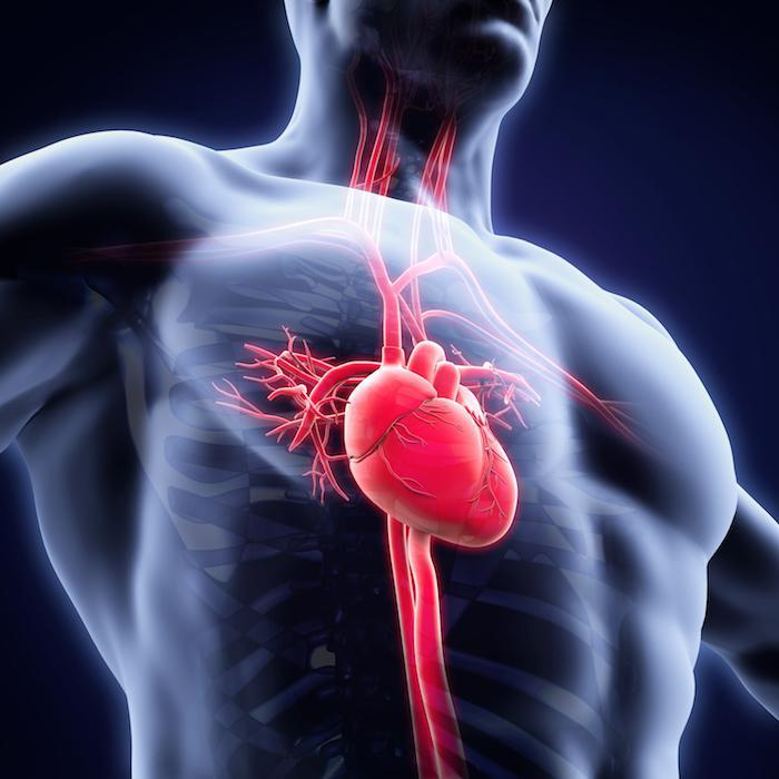 heart health, Dr. Bahjat Shahbandar
