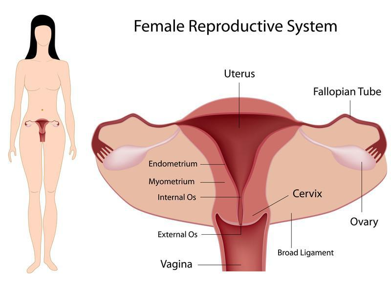 AN OVERVIEW OF BLOCKED FALLOPIAN TUBES: Deborah Smith, MD ...