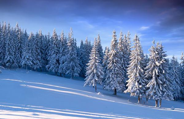 Beautiful winter snow scene