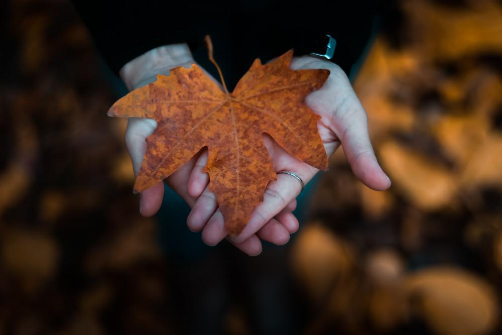 Closeup for hands holding leaf
