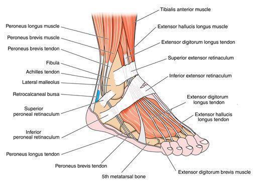 Foot And Ankle Huntsville Al Madison Al Sportsmed Orthopedic Surgery Spine Center