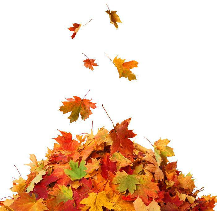 autumn leaves, cold weather foot conditions