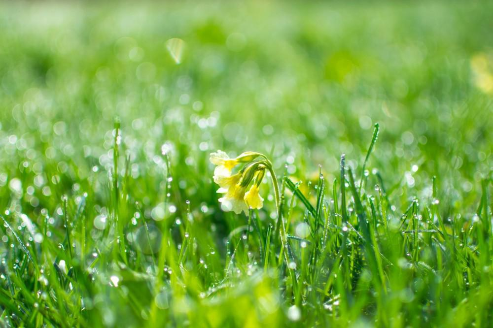 Blooming flower in dew grass