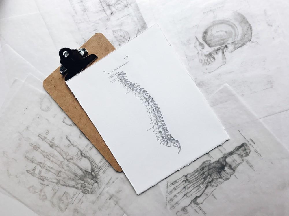 Chiropractor Delray Beach, Schrier Family Chiropractic & Regenerative Medicine