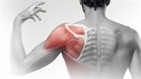 Chiropractic Shoulder Pain