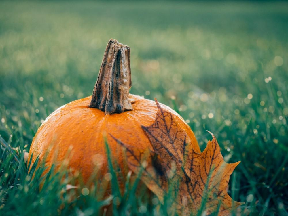 Pumpkin & Fall Leaf