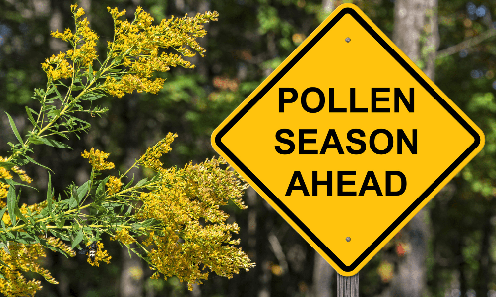 Sign with pollen season written on it with a forest in the background