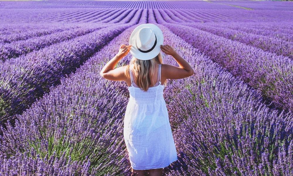 Lavender, Linalool & Medical Marijuana