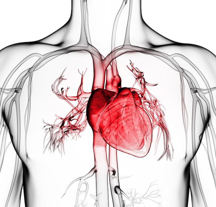Signs You Have Coronary Artery Disease