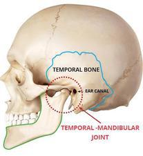 an image of the skull showing where the TMJ joint is located